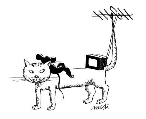 The cat handover