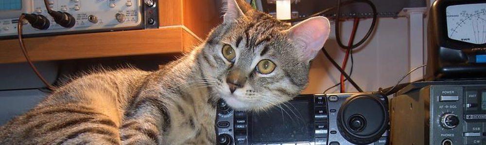 Wi-CAT LLC
